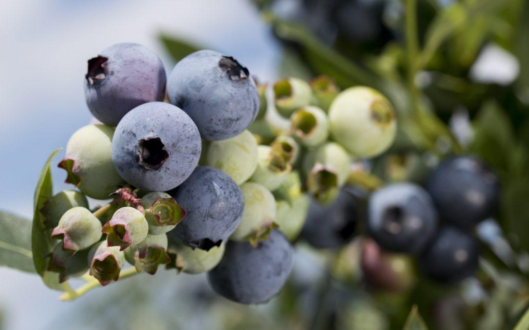 Choosing the Right Dooryard Fruit Varieties