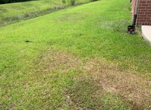 Dry areas in lawn that show up during dry periods from imperfections in irrigations system