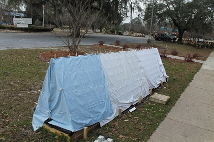 Homemade row cover for strawberries made of cow panels and sheets. Commercial row covers can be purchased using hoops and frost cloth. You can also make your own with pipes and bulk rolled frost cloth.