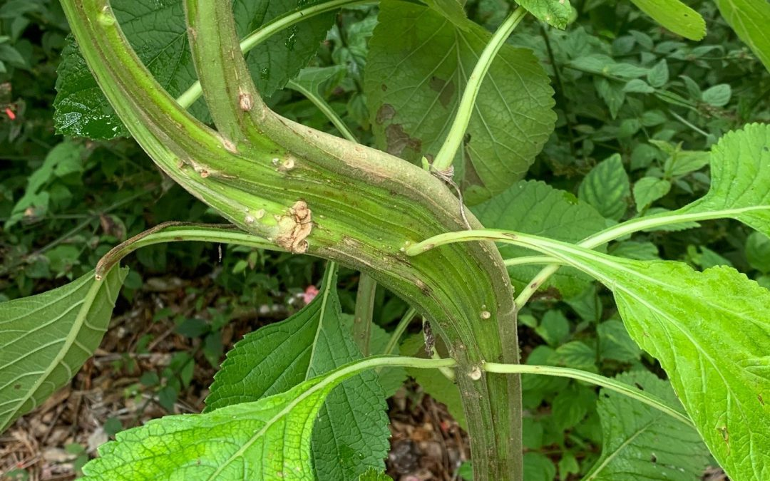 Plant Growth Abnormalities