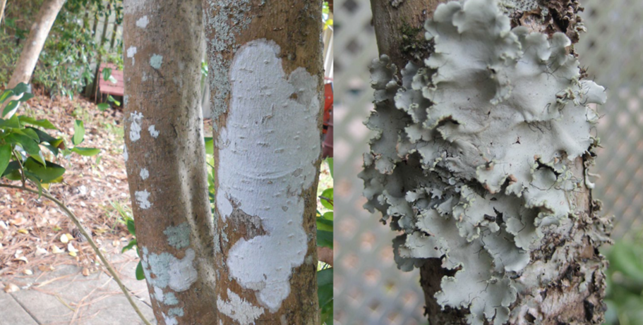 What Can Be Done To Prevent Tree Dieback?