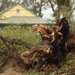 Handling Lawn and Landscape Problems after a Storm