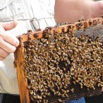 Third Annual UF/IFAS Beekeepers Field Day & Trade Show, Chipley FL, November 2, 2013!