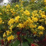 Trees and Shrubs for All Year Interest