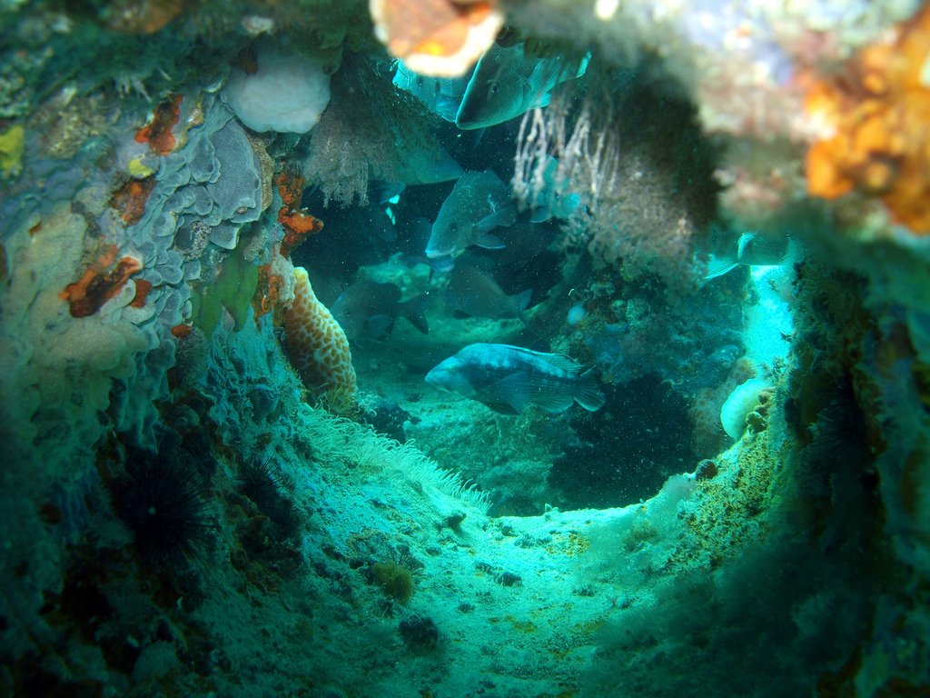 Fish swimming in cube reef located near Taylor County, Florida - Courtesy of Florida Sea Grant
