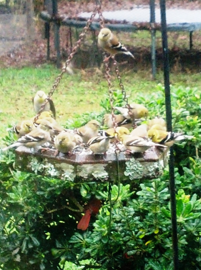 reminder to enhance backyard wildlife habitat panhandle outdoors