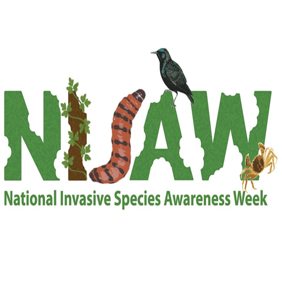 Aliens are invading – NISAW 2018