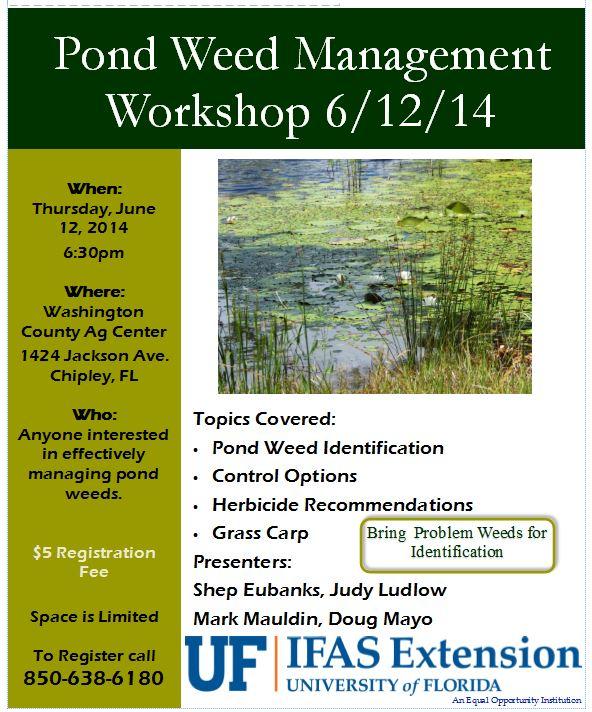 pond weed flyer