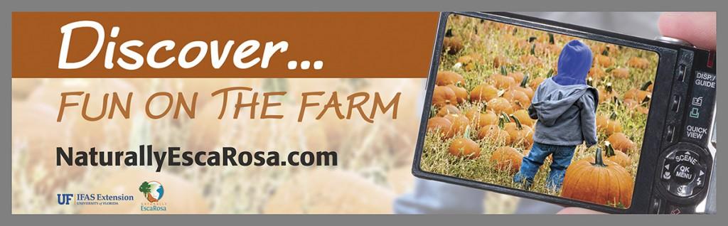 Fall pumpkin billboard
