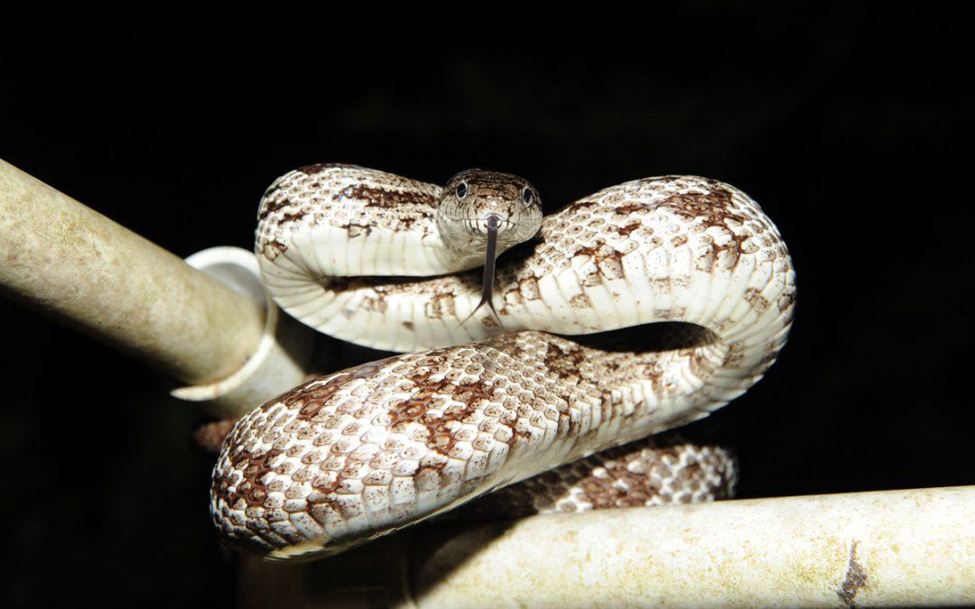 Fall Season Can Mean More Snake Encounters