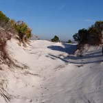 Discovering Florida's Panhandle – Our Barrier Islands – January