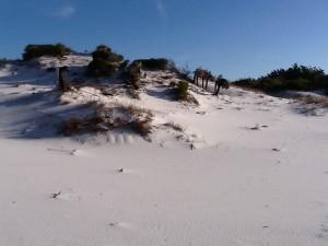 tertiary dune 2