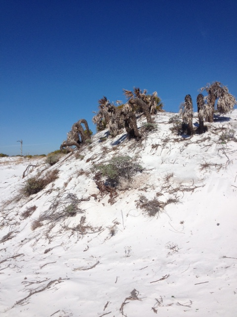 Discovering Florida's Panhandle – Barrier Islands – February 2015