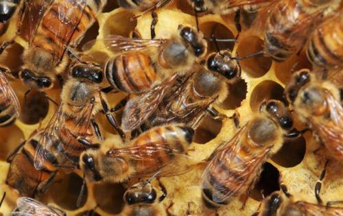 Beekeeping in the Panhandle Summer Series – Starts August 17th