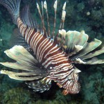 DNA Barcoding Our Way into Understanding the Lionfish Problem