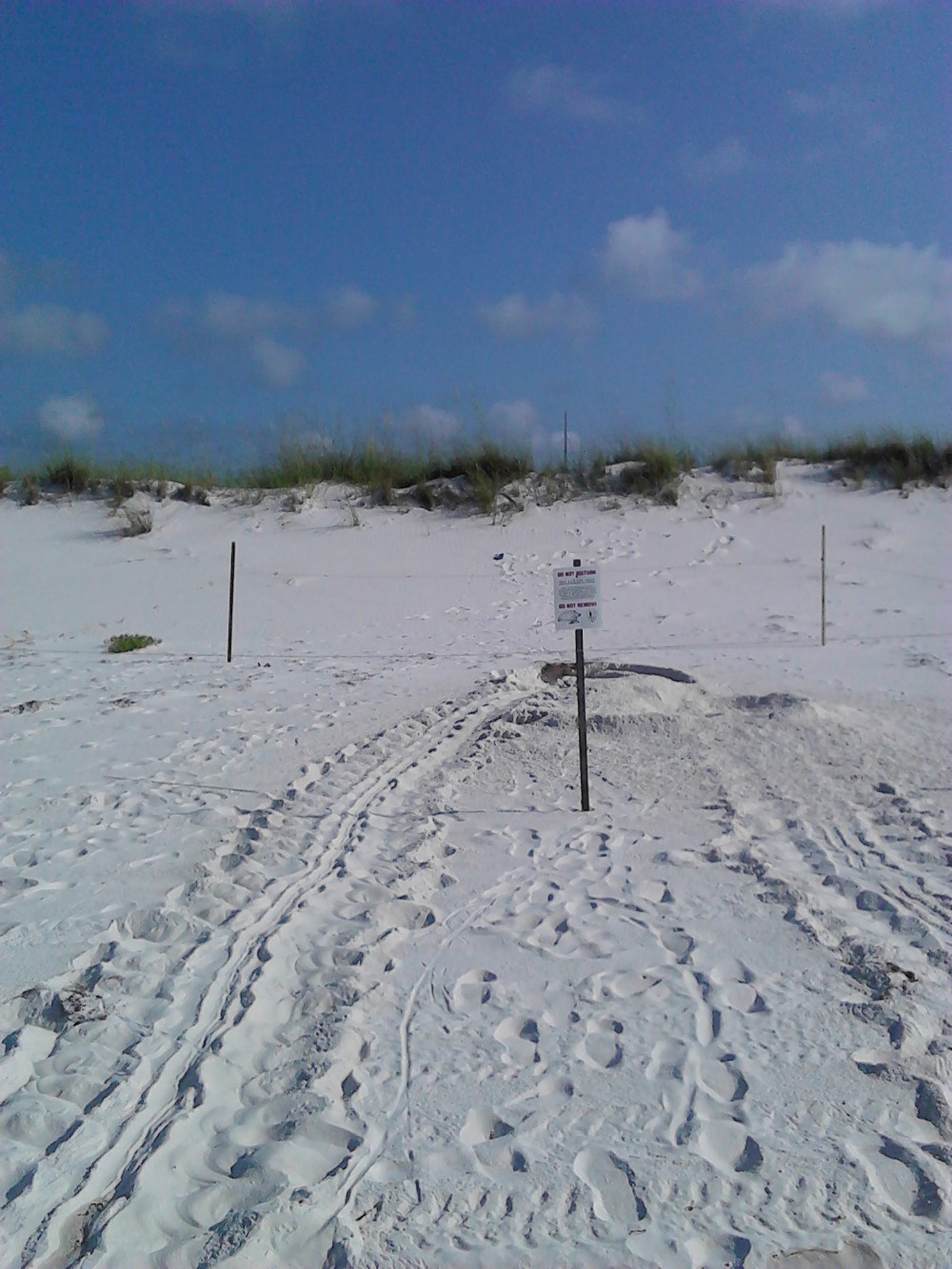 Sea Turtles of the Panhandle: 2016 Nesting Numbers and Notes