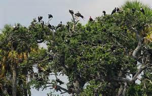 Nesting birds on Seahorse Key Photo: courtesy of flickr