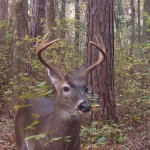 Wild about Deer:  Game Processing Workshop