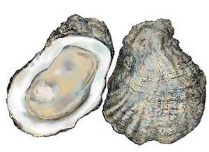 Oysters are one of the more popular shellfish along the panhandle. Photo: FreshFromFlorida