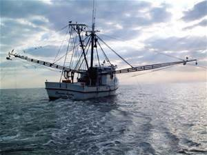 Shrimping. Photo: NOAA