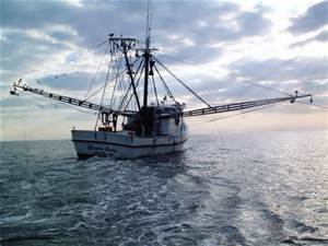 Seafood… What's in Peak Season for October?