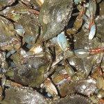 National Seafood Month – Blue Crabs