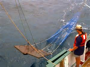 The basic otter trawl used for shrimping. Photo: North Carolina State University