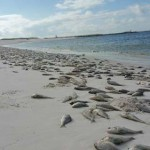 It's Happening … Red Tide
