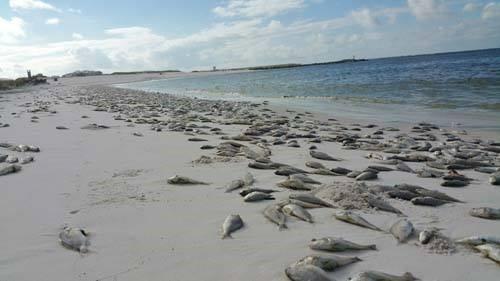 Panama city beach tides