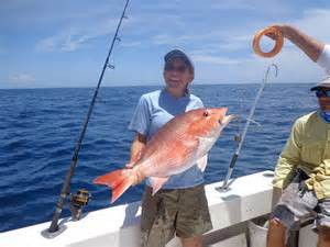 The king of finfish... the red snapper Photo: Florida Sea Grant