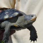 Those Terrific Terrapins