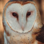 Owls – Florida's Remarkable Nocturnal Birds of Prey