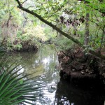 Panhandle Outdoors LIVE! Hikes the Aucilla Sinks Trail