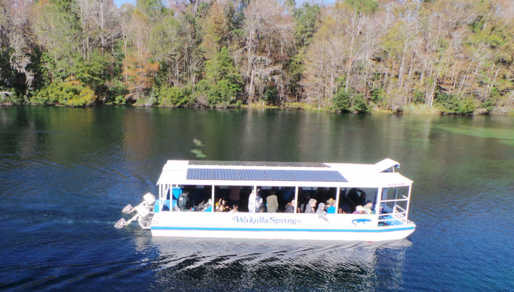Daily river cruises on the Wakulla River are a great way to see manatees and other unique wildlife. Photo: L. Scott Jackson
