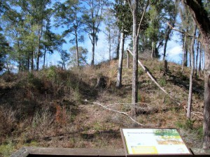 Twelve hundred years of erosion and overgrowth contrast with this Park depiction of the Great Mound in it's heyday Photo: Jed Dillard