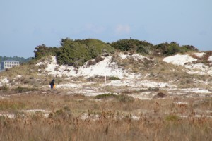 The dune fields of panhandle barrier islands are awesome - so reaching over 50 ft. in height. This one is near the Big Sabine hike (notice white PVC markers).