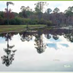 Bay County pond with no observed Giant Slavinia. Take Oct 2013 by Derek Fussell, FWC.