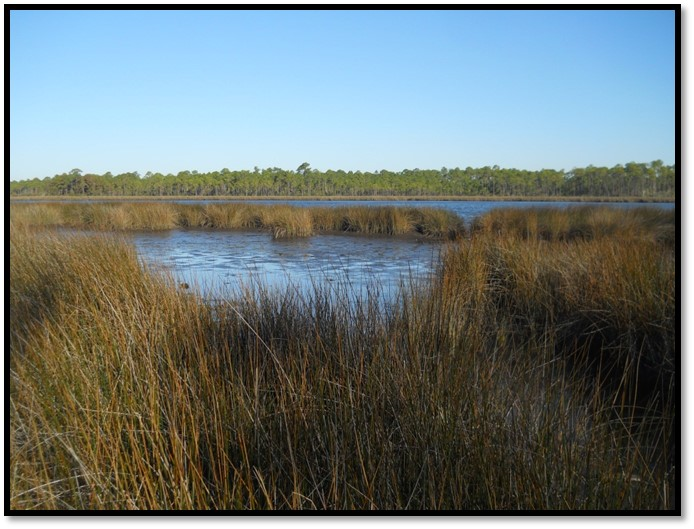 Florida Master Naturalist projects impact local communities