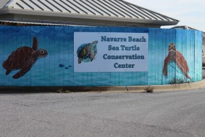 The Navarre Beach Sea Turtle Conservation Center.