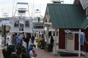 Charters include fishing, diving, snorkeling, and some collect marine life for you to see.