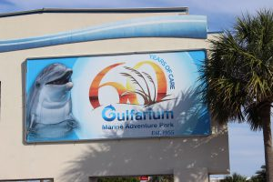 The Gulfarium in Ft. Walton Beach gives those who do not get a chance to go offshore, or dive, to see some of the unique marine organisms found in the Gulf of Mexico.