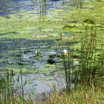 Pond Management Workshops May 31 and June 7