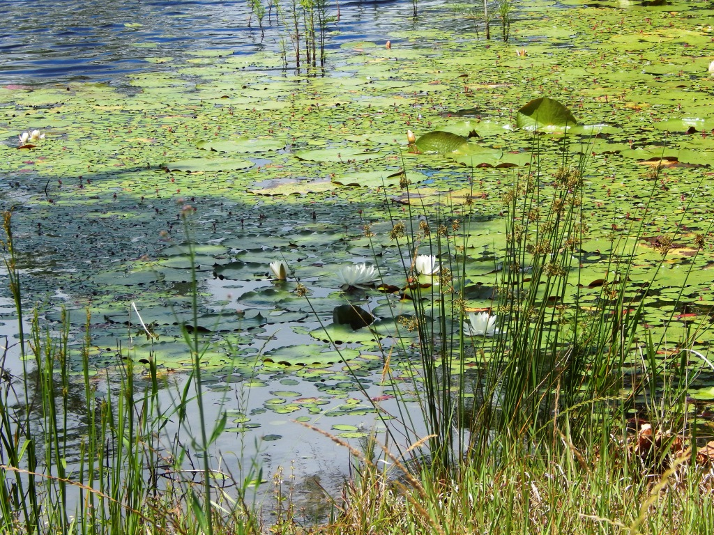 Now is the Time to Address Aquatic Weeds