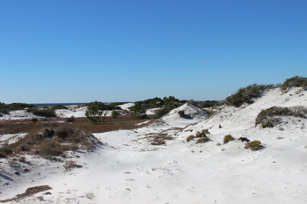 Barrier Island Wonderland