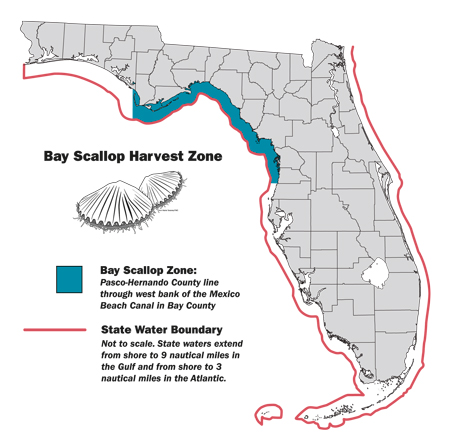 http://myfwc.com/fishing/saltwater/recreational/bay-scallops/