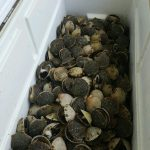 Scalloping: Unrivaled Natural Experience for Kids