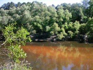The Ochlockonee runs yellow-brown between Leon and Gadsden counties. Photo: Rosalyn Kilcollins