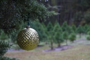 A christmas tree decoration hanging upon a Christmas tree at a tree farm