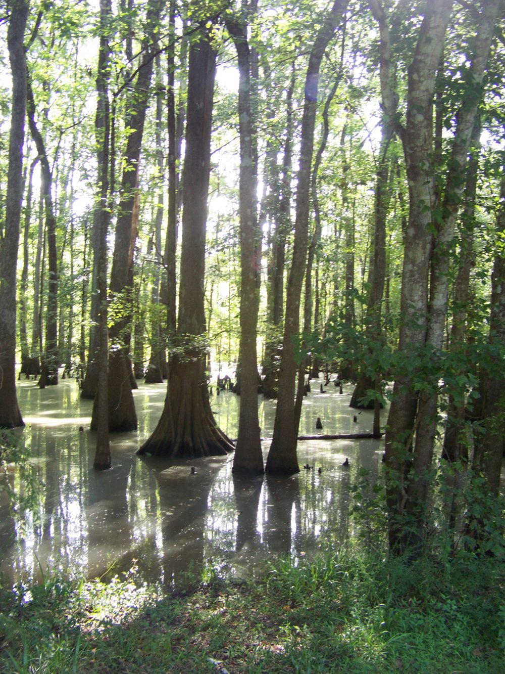 You Say It's Just a Swamp…
