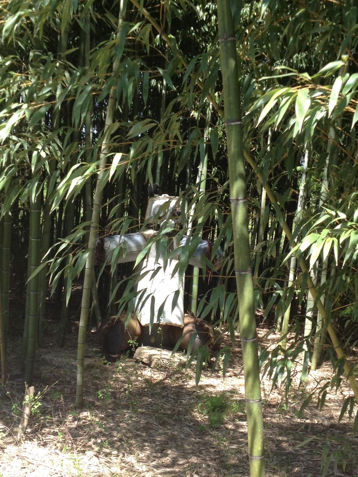 NISAW 2018:  Invasive Bamboo
